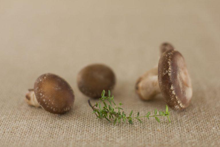 Casa do Chascada - Cogumelos Shiitake biológicos Vila do Conde Porto Matosinhos Maia