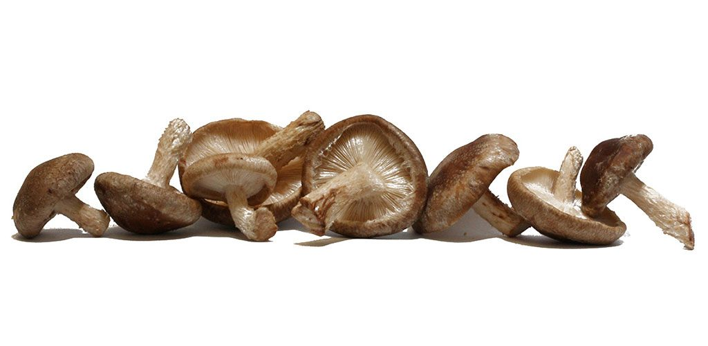 Os Benefícios dos Cogumelos Shiitake
